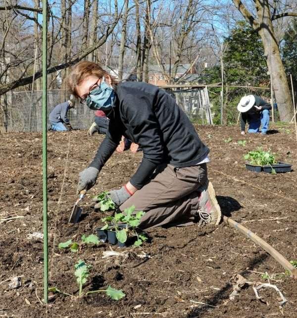 A masked volunteer kneels to plant seedlings in the Garden of Hope.