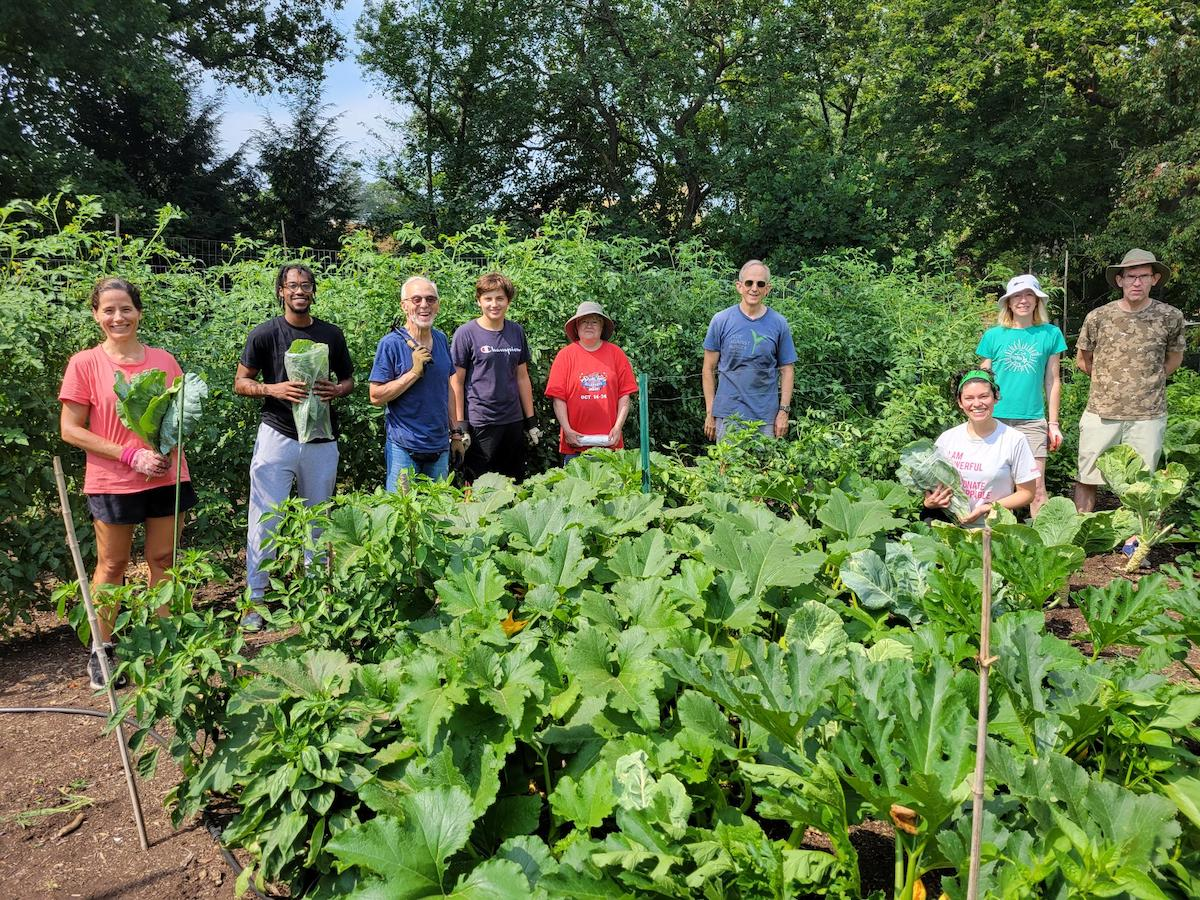 Volunteers harvesting leafy greens in Garden of Hope
