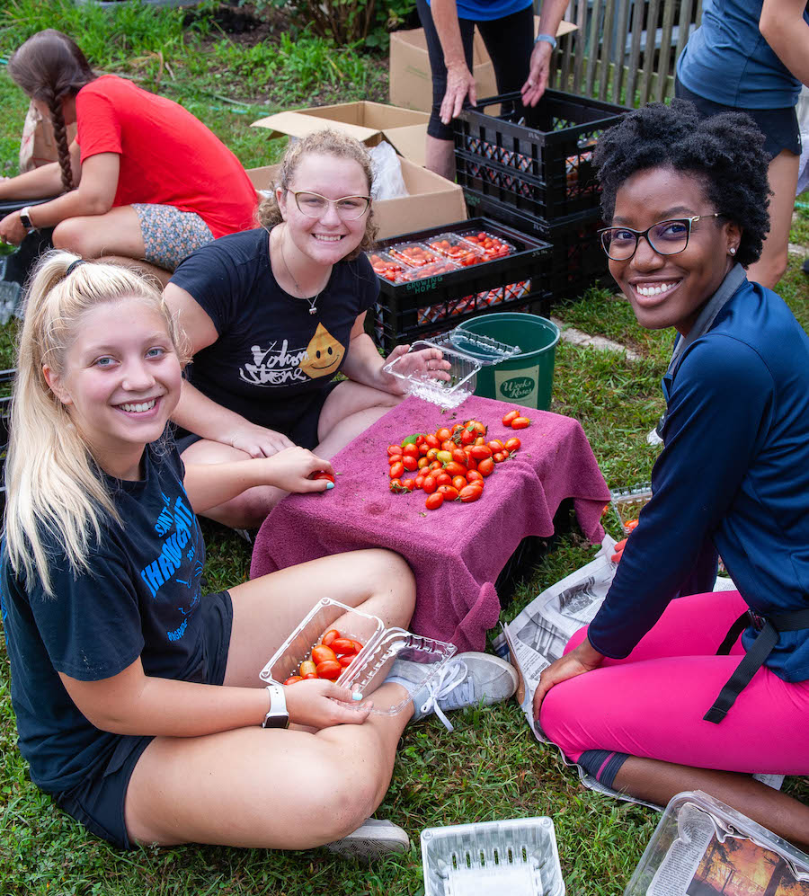 Volunteers sort and pack tomatoes near the Garden of Hope.
